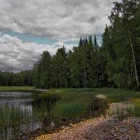 Карелия, озеро Янисярви :: Владимир Ильич Батарин