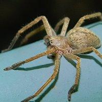 Не убивайте пауков! :: Вячеслав Платонов