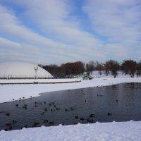 В зимнем парке :: Ольга