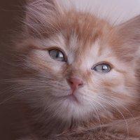 Имбирный котёнок :: Екатерина Торганская