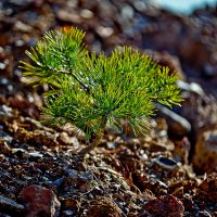 И на камнях растут деревья.... :: Татьяна Губина