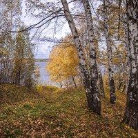 На берег реки :: Владимир Макаров