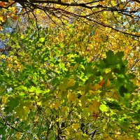 Ранняя осень :: Натали Пам
