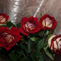 Букет роз :: Татьяна Пальчикова
