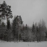 зима :: Александр Попков