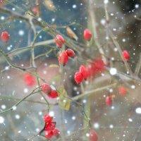 Снегопад.. :: Galina ✋ ✋✋