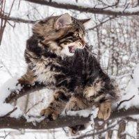 Шериф.Курильский котик. :: Olga Kramoreva