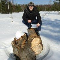 На пне... :: Vladimir Perminoff