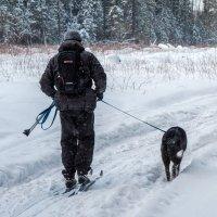 Лыжники :: Владимир Лазарев