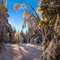 Заснеженный лес. :: Фёдор. Лашков