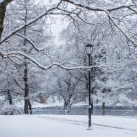 Зимнее утро :: Алёнка Шапран
