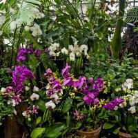 В ботаническом саду :: Ольга Маркова
