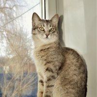 Седела кошка на окошке.. :: Клара