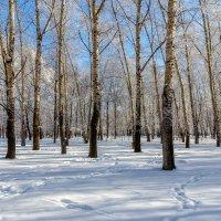 В зимнем парке. :: Виктор Иванович