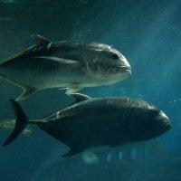 Рыбки... :: Дмитрий Петренко
