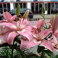 Городские цветы (серия). Нежные лилии :: Nina Yudicheva
