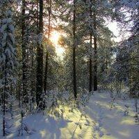 В лесу. :: Галина Полина