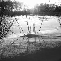 свет и тень :: Олеся Зырянова