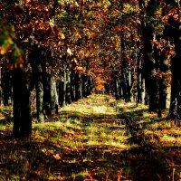 осень :: юрий