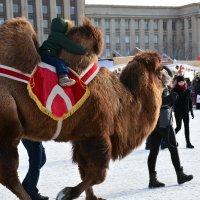 А кто же не любит за горб подержаться и на верблюде покататься????? :: Валентина Папилова