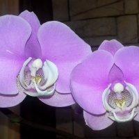 Орхидея. :: Мила Бовкун