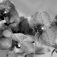 ветка орхидеи :: Andrei Antipin
