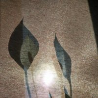 Свет и тень :: Tanja Gerster