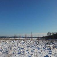 Дневное поле :: Юлия