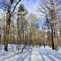 Хоть февраль злится ,но весну чует... :: Anatoley Lunov