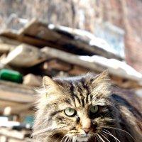 хозяин старых дворов :: Ingwar