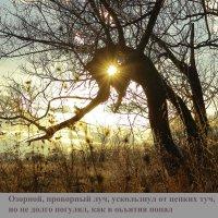 Проворный луч :: Григорий Капустин