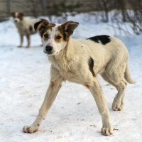 собаки :: Ольга Барчан