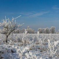 зима :: Ольга Барчан