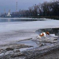 Белый Бим - рыжее ухо :: Анатолий Шулков