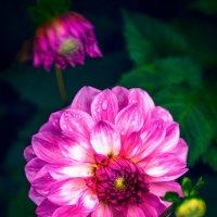 Цветы :: Gegrey К.