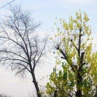 Контрасты осени :: татьяна