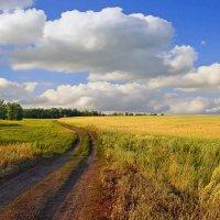 Дорога  в  поле :: Геннадий С.
