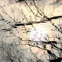 В мире отражений :: Нина Бутко