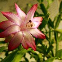 есть глаза у цветов :: александр дмитриев
