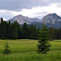 Альпийское лето :: Ольга