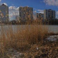 Городское озеро :: Сергей Рубан