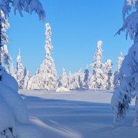 Зимою утром ясным... :: Юрий Харченко