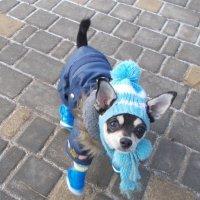 Зимняя форма одежды :: Александр Скамо