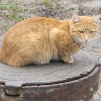 Отдых перед праздником, День кота начинается... :: Александр Скамо