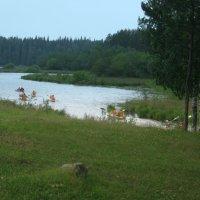Байдарочники на Валааме, доплыли до Лещевого озера :: Татьяна