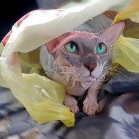 Мой мешок -моя крепость :: Андрей Зайцев