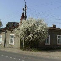 Весна  в   Ивано - Франковске :: Андрей  Васильевич Коляскин