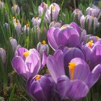 Репетиция весны :: Надежда Бахолдина