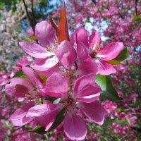 Цветущий сад. :: Валерий Медведев