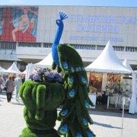 Вот павлин сине-зелёный :: Дмитрий Никитин